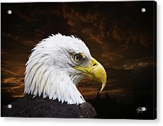 Bald Eagle - Freedom And Hope - Artist Cris Hayes Acrylic Print by Cris Hayes