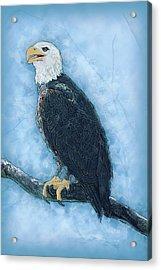 Bald Eagle Acrylic Print by Jack Zulli