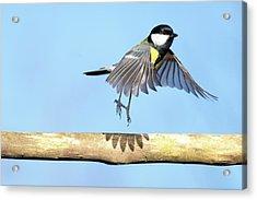 Ballerina Bird Acrylic Print by Marcel ter Bekke