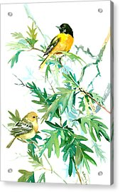 Baltimore Orioles And Oak Tree Acrylic Print by Suren Nersisyan