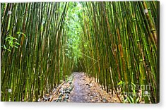 Bamboo Forest Trail Hana Maui 2 Acrylic Print by Dustin K Ryan