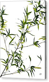 Bamboo Leaves Acrylic Print by Tim Gainey