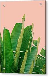 Banana Leaves Acrylic Print by Rafael Farias