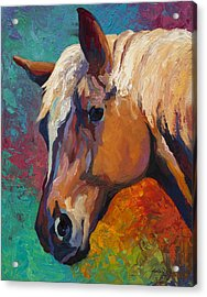 Bandit Acrylic Print by Marion Rose