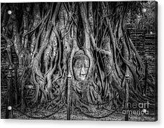 Banyan Tree Acrylic Print by Adrian Evans