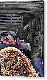 Barn Cats Acrylic Print by Jan Amiss Photography