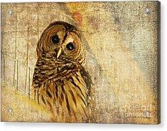 Barred Owl Acrylic Print by Lois Bryan