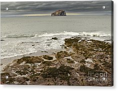 Bass Rock Acrylic Print by Stephen Smith