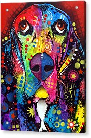 Basset Hound Acrylic Print by Dean Russo