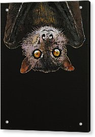 Bat Acrylic Print by Michael Creese