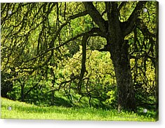 Bathed In Spring Acrylic Print by Donna Blackhall