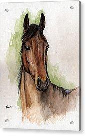 Bay Horse Portrait Watercolor Painting 02 2013 Acrylic Print by Angel  Tarantella