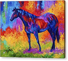 Bay Mare II Acrylic Print by Marion Rose