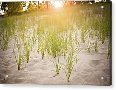 Beach Grasses Number 3 Acrylic Print by Steve Gadomski