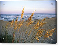 Beach Scene With Sea Oats Acrylic Print by Steve Winter