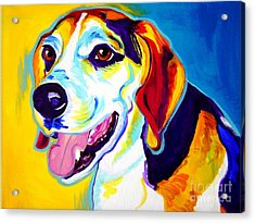 Beagle - Lou Acrylic Print by Alicia VanNoy Call