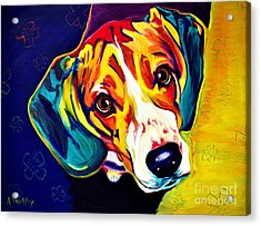 Beagle - Bailey Acrylic Print by Alicia VanNoy Call