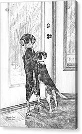 Beagle-eyed - Beagle Dog Art Print Acrylic Print by Kelli Swan