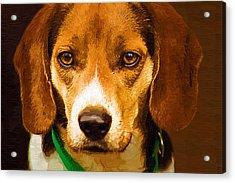 Beagle Hound Dog In Oil Acrylic Print by Kathy Clark