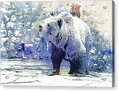 Bear Walk Acrylic Print by Jutta Maria Pusl