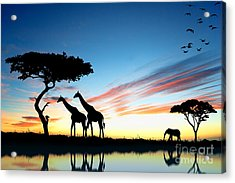 Beautiful  Animals In Safari Acrylic Print by Boon Mee