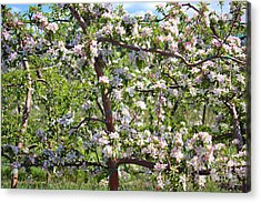 Beautiful Blossoms - Digital Art Acrylic Print by Carol Groenen