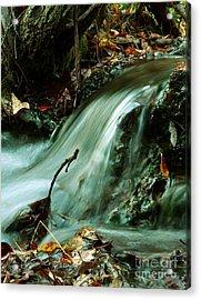 Beautiful Creek Acrylic Print by Mario Brenes Simon