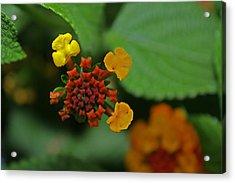 Beautiful Flower Acrylic Print by M Valeriano