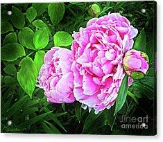 Beautiful Garden Peony Acrylic Print by Patricia L Davidson