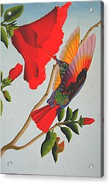 Beautiful Hummingbird Acrylic Print by Brian Leverton