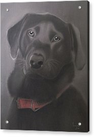 Beautiful Labrador Retriever Acrylic Print by Inge Lewis