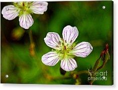 Beautiful Wild Flower Acrylic Print by Mario Brenes Simon