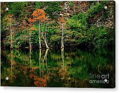 Beaver's Bend Color Explosion Acrylic Print by Tamyra Ayles