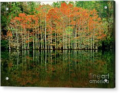 Beaver's Bend Cypress All In A Row Acrylic Print by Tamyra Ayles