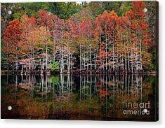 Beaver's Bend Cypress Soldiers Acrylic Print by Tamyra Ayles