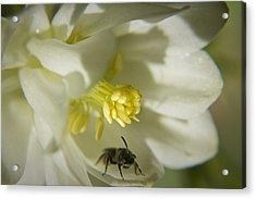 Bee Mine Acrylic Print by Teresa Mucha