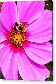 Bee On Pink Acrylic Print by Bill Caldwell -        ABeautifulSky Photography