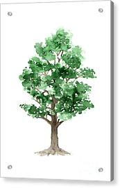 Beech Tree Minimalist Watercolor Painting Acrylic Print by Joanna Szmerdt