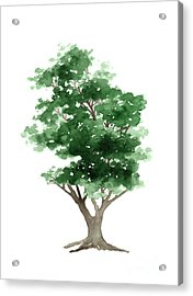 Beech Tree Silhouette Watercolor Art Print Painting Acrylic Print by Joanna Szmerdt