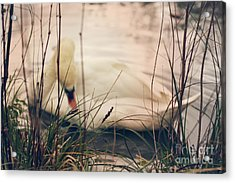 Before The Night Falls Acrylic Print by Jasna Buncic