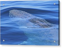 Below The Surface Acrylic Print by Shoal Hollingsworth