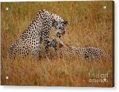 Best Of Friends Acrylic Print by Stephen Smith