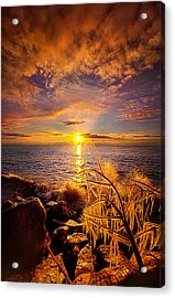 Beyond The Grid Acrylic Print by Phil Koch