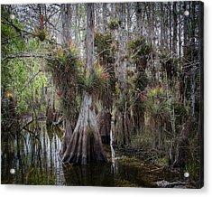 Big Cypress Preserve Acrylic Print by Bill Martin