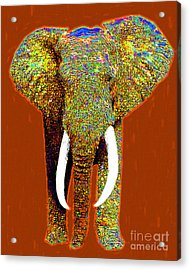 Big Elephant 20130201p20 Acrylic Print by Wingsdomain Art and Photography
