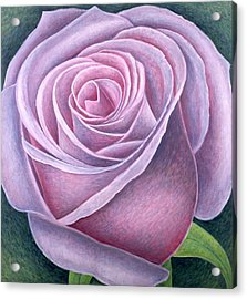 Big Rose Acrylic Print by Ruth Addinall