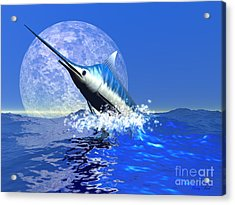 Billfish  Acrylic Print by Corey Ford