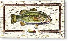 Birch Bass Acrylic Print by JQ Licensing
