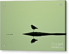 Bird In A Pond Acrylic Print by Mario Brenes Simon