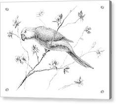 Bird In Flowering Tree Acrylic Print by Crazy Cat Lady